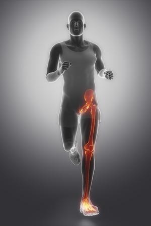 足関節の解剖学 写真素材