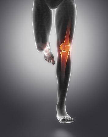 articulaciones: Anatomía de la rodilla Foto de archivo