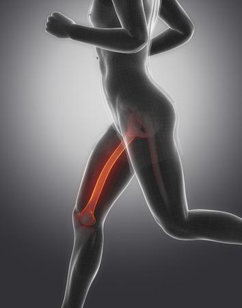 perineum: Focused on femur