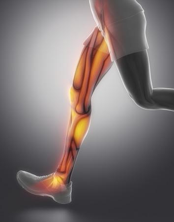 gastrocnemius: Leg muscle anatomy