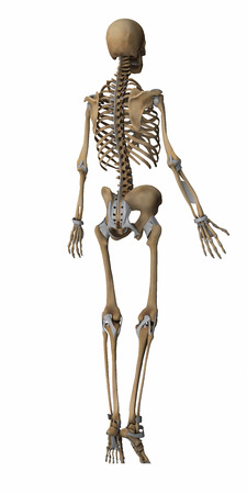 musculus: Skeleton anatomy map Stock Photo