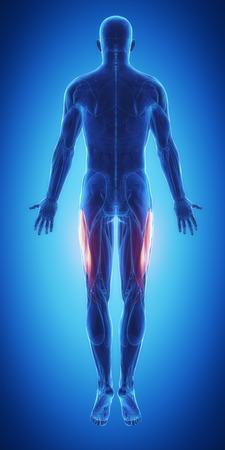 leg calf injury: Vastus lateralis Stock Photo