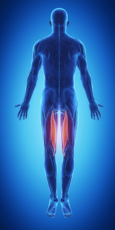 broken knee: semitendinosus