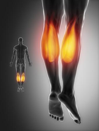 ligament: gastrocnemius