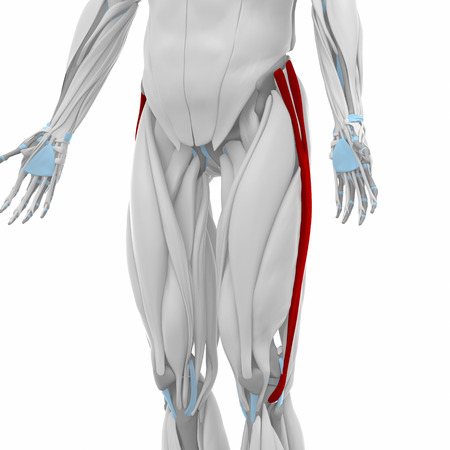 tract: Iliotibial tract - Muscles anatomy map Stock Photo