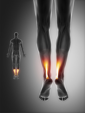 hamstrings: Achilles anatomy Stock Photo