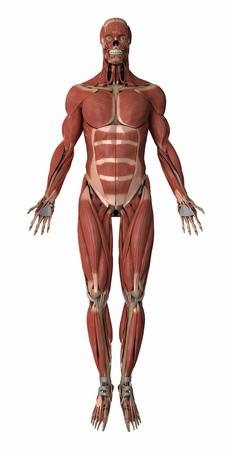 筋肉の解剖学の地図