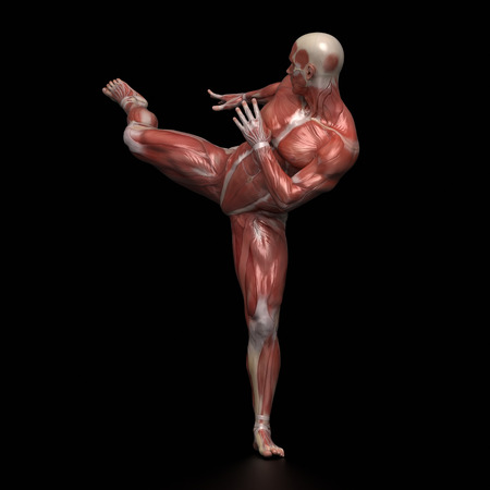 Man Muscular Anatomy Infight Pose Stock Photo Picture And Royalty