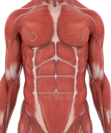 Anatomie spier kaart op wit wordt geïsoleerde Stockfoto