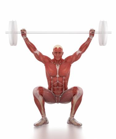 muscle: Anatomía mapa del músculo blanco aislado - levantamiento de pesas se caliente Foto de archivo