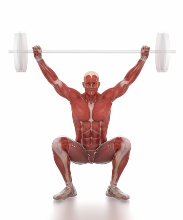 Anatomy muscle map white isolated - weightlifting warm up Stock Photo