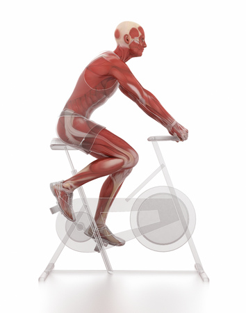 strong skeleton: Work out and fitness concept - bike warm up
