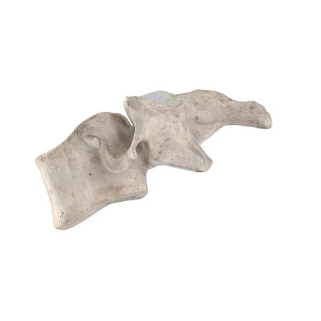 C4 Cervical vertebra  isolated on white left lateral view