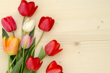 romantic picture: Tulips on a light wooden background. romantic picture top view.