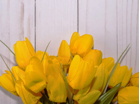 Yellow tulips bunched together with a white wooden fence background