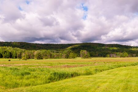 A grassy field in front of a forest with mountains in the background under bright white clouds on a summer day in Warren County, Pennsylvania, USA 版權商用圖片