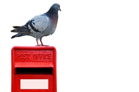 Wood pigeon standing on a bright red post box
