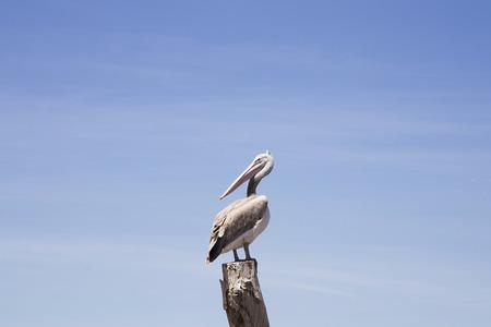 lonely bird: Lonely bird. Stock Photo