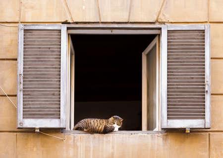 Cat having a rest on sill of open window with shutters in Italian style 免版税图像