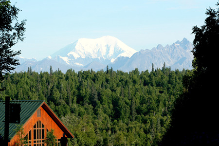 viewable: Mt. Denali is viewable raising over the evergreens in the distance