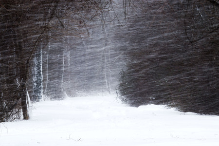Snow blowing sideways during a blizzard inn Southards Pon Park, Babylon, NY