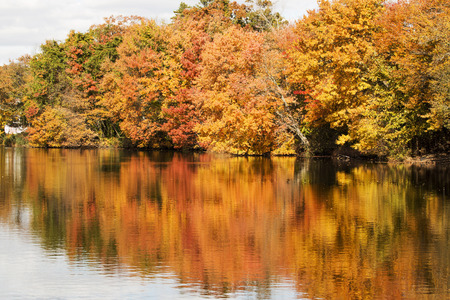 Southards Pond trees at the peak of their fall colors on November 1, 2016