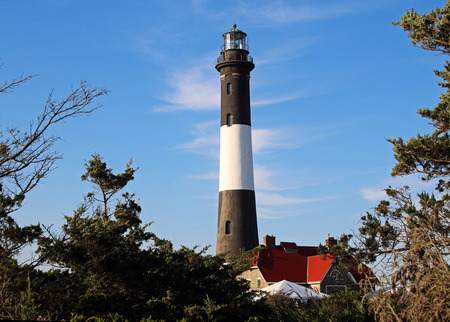 brusch: The Fire Island Lighthouse with lots of brush in frot and blue sky behond