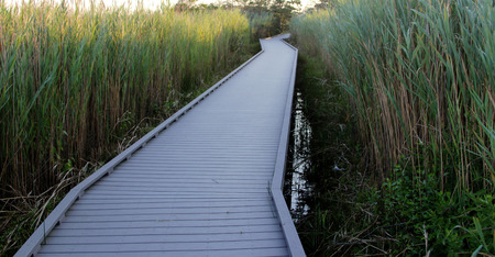 brusch: The path to the Fire Island Lighthouse through the beach grass Stock Photo