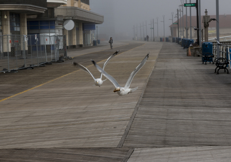 Seagulls with bread, flying very low over the Atlantic City boardwalk on a very foggy February morning. Stock Photo
