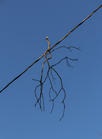A branch from a tree is hanging on edectricity wire after a very windy afternoon.