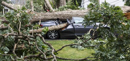 A car gets smashed when a tree falls over during a summer storm.