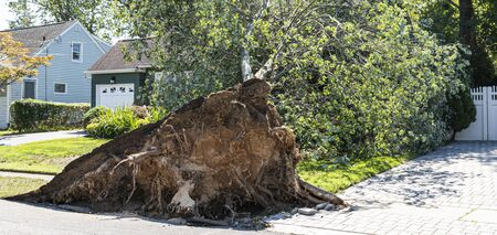 A large tree crashes down on a house during a windy thunderstorm featuring microbursts.