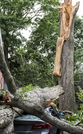 A car is crushed after a tree splits apart during a wind storm in Babylon Long Island New York.