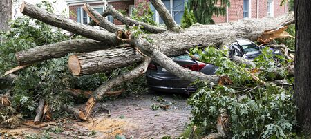 A car parked in the driveway has a tree fall on to it during a wind storm on Long Island.