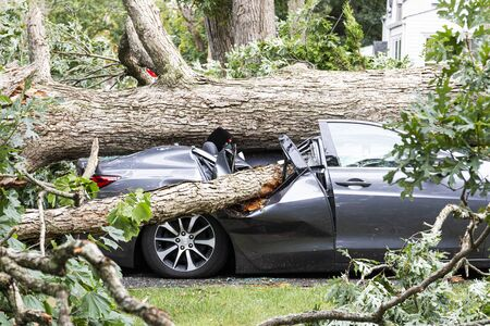 A car in the driveway has a tree fall on top of it and crush it during a summer storm in Babylon New York. Stok Fotoğraf