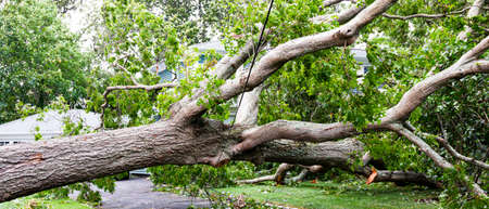 Tree carshes to the ground from tropical storm Isaias and is covering a driveway and balancing on the electric wire. Imagens - 153363007