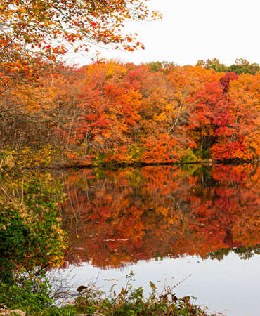 Colorful autumn leaves on trees reflecting in the waters of a lake in Long Island New York.
