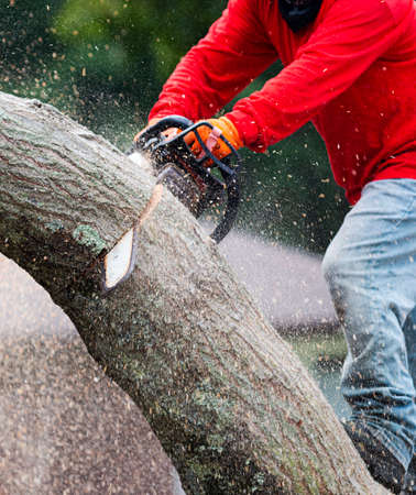 A landscaper is cutting a tree up with a chainsaw with saw dust flying everywhere.