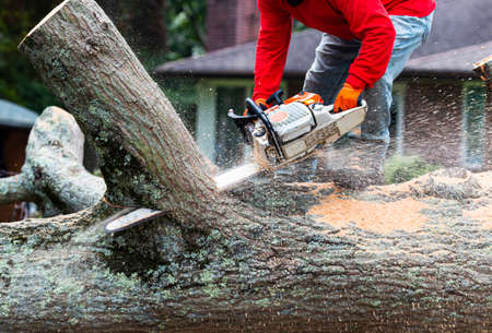 A landscaper is standing on a tree that is on the ground cutting  it apart with a chainsaw.
