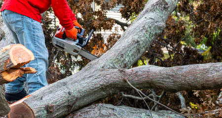 A man with a chainsaw standing in the middle of many parts of a tree that fell during a storm is working to temove the tree from the porperty.