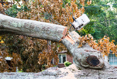 While removing a tree that fell from hurricaine Isaias I chainsaw is stuck in the tree as the branch bends.
