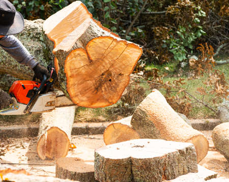 A large tree is being removed from a residential property after it fell from a strong wind storm by a landscaper slicing it up with a chainsaw. Imagens