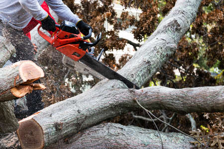 A landscaper is cutting up parts of a tree that had been blown down during a tropical storm on Long Island New York.