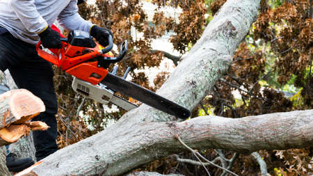 A landscaper is removing a tree from the ground by slicing it up with a chainsaw.