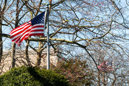 Two American flags blowing in the wind in early spring looking though the branches of trees with no leaves. Imagens