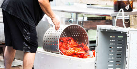 The cook at a restaurant in Port Clyde Maine cooking fresh Maine Lobsters and pouring them into a bin for the waitresses to pick out for their customers in Port Clyde Maine.