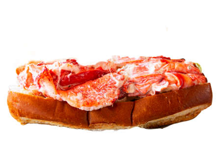 One fresh Maine lobster roll with a white background.