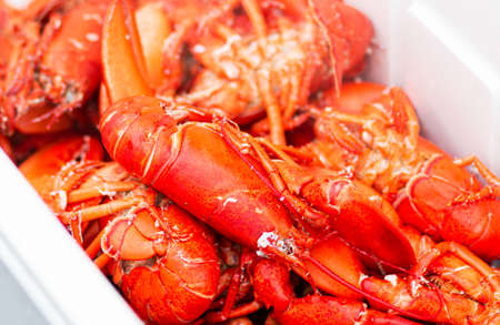 A bin is full of fresh caught steamed Maine lobsters close up.