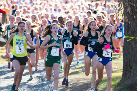 Wappingers Fall, NY, USA - 23 November 2019: three hundred girls four hundred meters into a 5K race compete for a state championship in cross country running.
