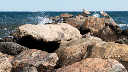 Two seagulls standing on rocks while water is splashing from the Long Island Sound at Sunken Meadow State Park.